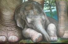 Resting Baby elephant